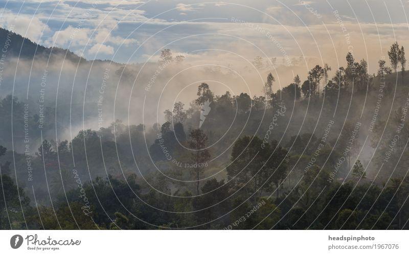 Morgendämmerung bei Nuwara Eliya, Si Lanka Natur Ferien & Urlaub & Reisen grün Landschaft Einsamkeit ruhig Ferne Berge u. Gebirge Freiheit Tourismus Ausflug