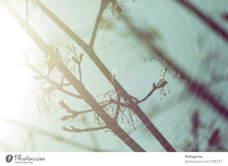 riecht nach frühling Natur Sonne Sonnenlicht Frühling Schönes Wetter Baum Stimmung Farbfoto Außenaufnahme Nahaufnahme Tag Licht Sonnenstrahlen Gegenlicht