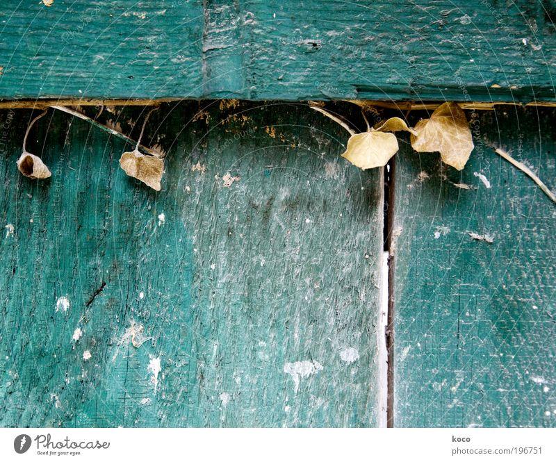 Vom Blühen und Verwelken Natur alt grün Pflanze Sommer Blatt Herbst oben Holz grau Traurigkeit Stimmung braun Umwelt Trauer trist