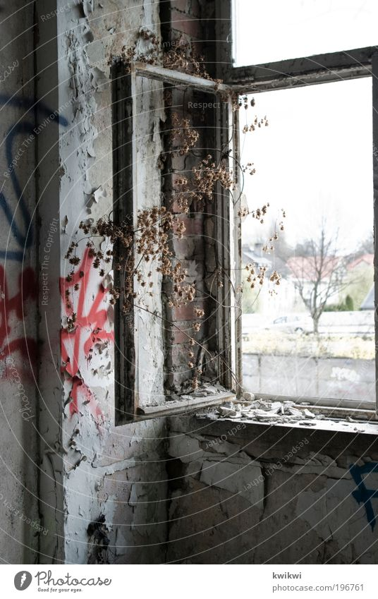 baum Baum Pflanze Einsamkeit Wand Fenster Graffiti Stein Mauer Glas Beton Fassade ästhetisch Fabrik Ruine Industrieanlage Bauwerk