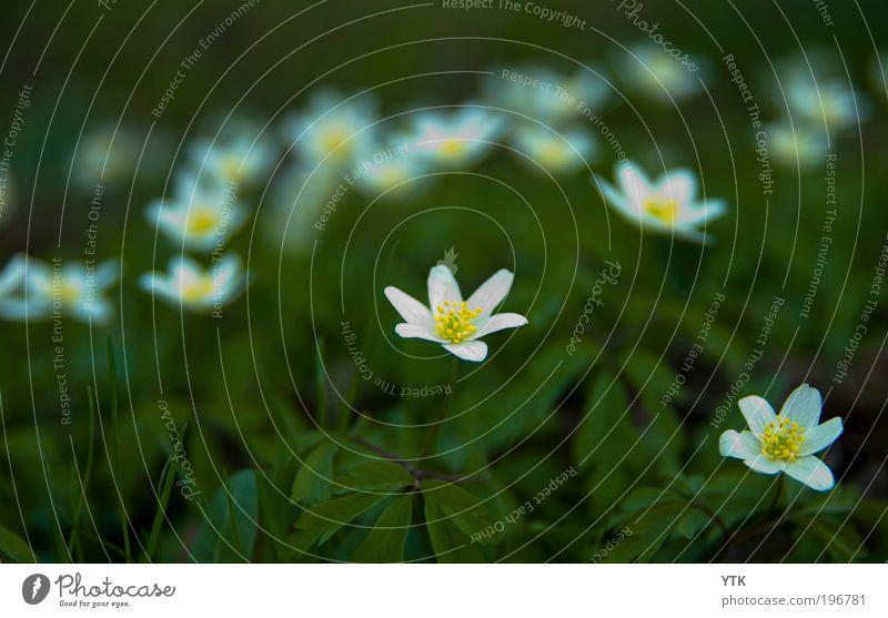 I will follow you into the Dark Natur grün Pflanze Blume Blatt Umwelt dunkel Wiese Frühling Traurigkeit Blüte Stimmung wild Klima Wachstum leuchten