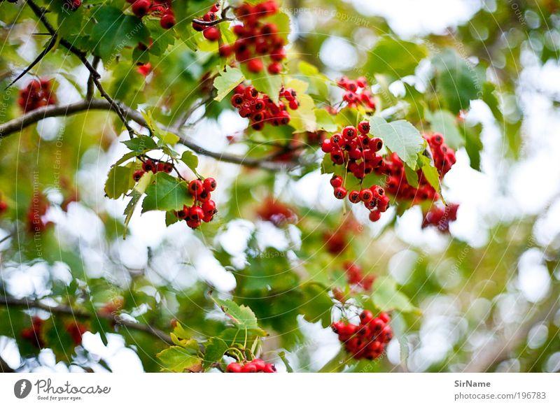 120 [Beerenfrish] Natur Baum grün Pflanze rot Sommer Blatt Wald Erholung Wiese Park Landschaft Feld Umwelt frisch Hoffnung