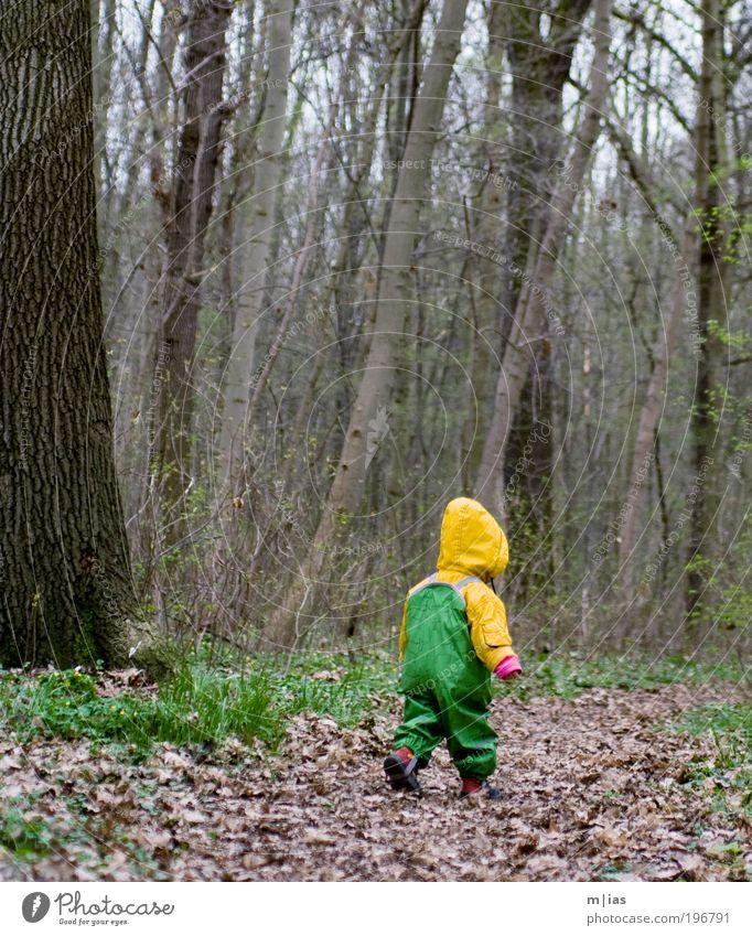 kleiner Waldläufer Mensch Kind Natur Baum Pflanze Mädchen Blatt Einsamkeit Wald Umwelt Leben Herbst Junge Regen Erde Kindheit