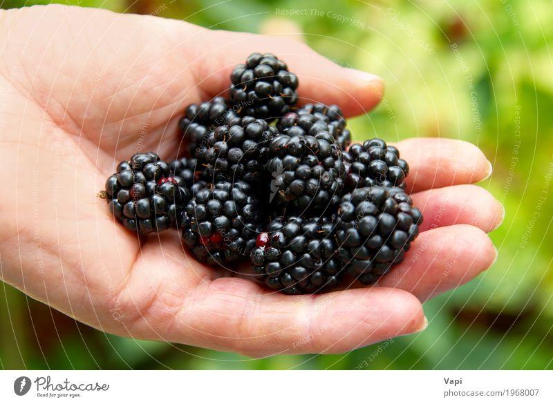 Stapel Brombeere Natur Sommer grün Hand rot schwarz gelb natürlich Garten Lebensmittel wild Frucht frisch lecker Bioprodukte Dessert