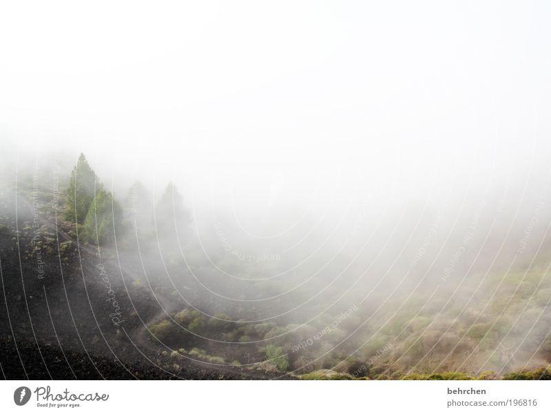 """""""jaja, die flachländer"""" Natur Baum Ferien & Urlaub & Reisen Ferne Freiheit Berge u. Gebirge Umwelt Regen Eis Zufriedenheit Kraft Ausflug Nebel Insel Tourismus"""