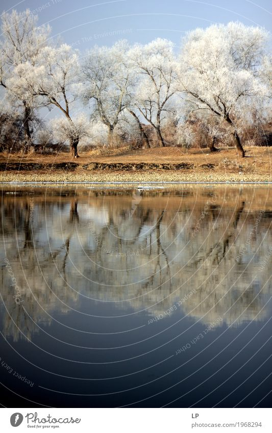 Winterlandschaft am Fluss Mures Natur Weihnachten & Advent Baum Landschaft Erholung Umwelt Innenarchitektur Gefühle Schnee Ausflug wandern Eis Abenteuer