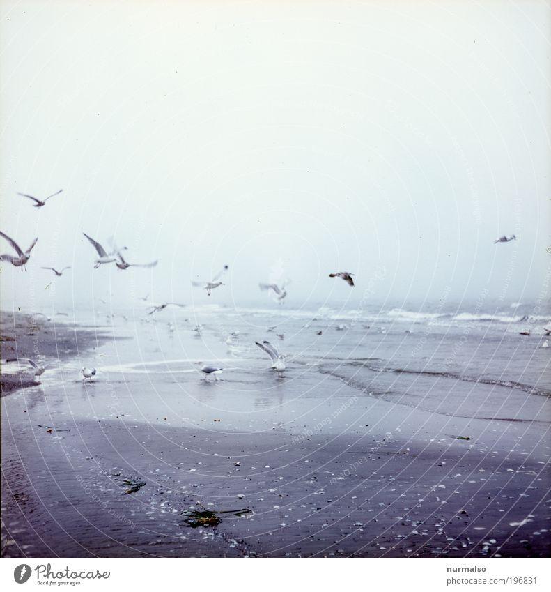 Möwenmorgensport Natur Wasser Meer Strand Ferien & Urlaub & Reisen ruhig Ferne kalt Erholung Herbst Landschaft Vogel Kunst Nebel Ausflug