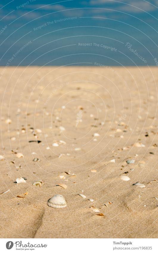Shell Station Meer Sommer Strand Ferien & Urlaub & Reisen Einsamkeit Ferne Erholung Sand Küste gehen Horizont Unendlichkeit Ostsee Muschel Nordsee Fernweh