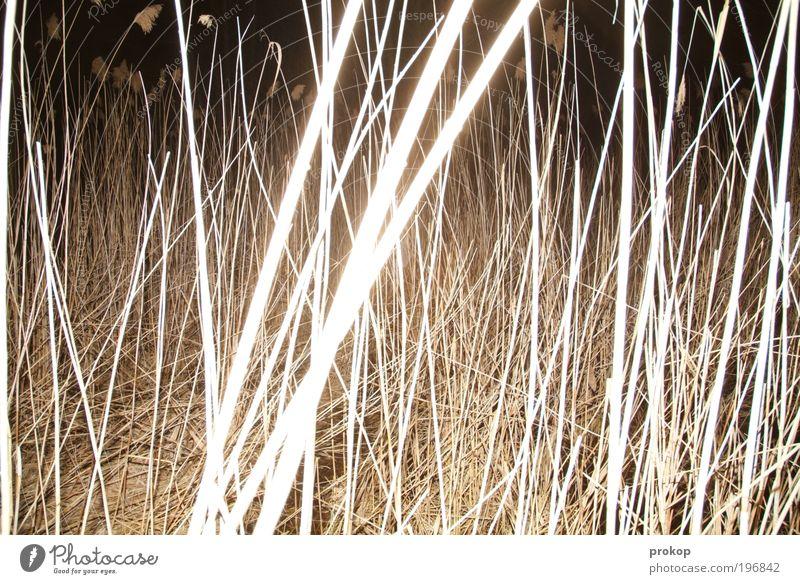 Knietief Umwelt Natur Landschaft Pflanze Schilfrohr Seeufer Flussufer dunkel gruselig natürlich wild Angst verstört chaotisch Idylle Farbfoto Gedeckte Farben