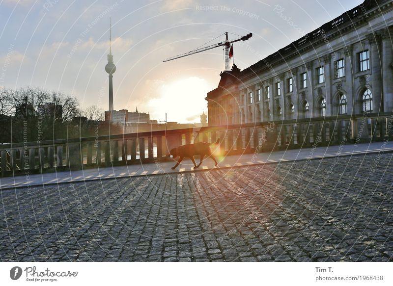 Berlin Stadt Hauptstadt Stadtzentrum Altstadt Skyline Menschenleer Brücke Architektur Sehenswürdigkeit Wahrzeichen Berliner Fernsehturm Pergamon Museum Tier