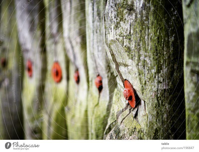 BOLLWERK alt grün rot dunkel Holz grau braun Kraft Metall groß bedrohlich Schutz fest Zaun Wachsamkeit Holzbrett