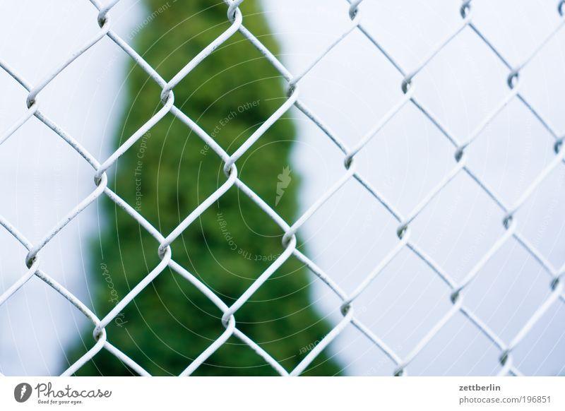 Zaun Pflanze Erholung Garten Wachstum Zaun Grenze Schrebergarten Nachbar Gartenbau Grünpflanze April Draht Grundstück Baum Kleingartenkolonie Pinie
