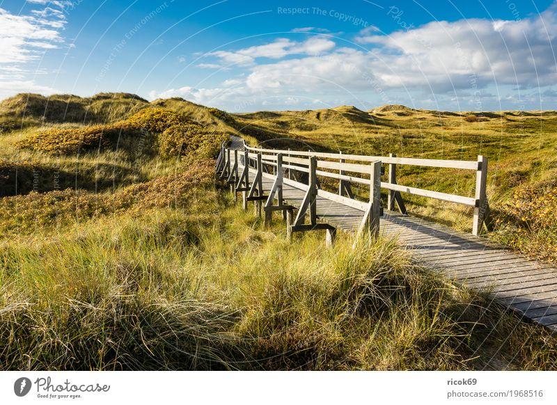 Landschaft in den Dünen auf der Insel Amrum Erholung Ferien & Urlaub & Reisen Tourismus Natur Wolken Herbst Sträucher Küste Nordsee Brücke Wege & Pfade blau