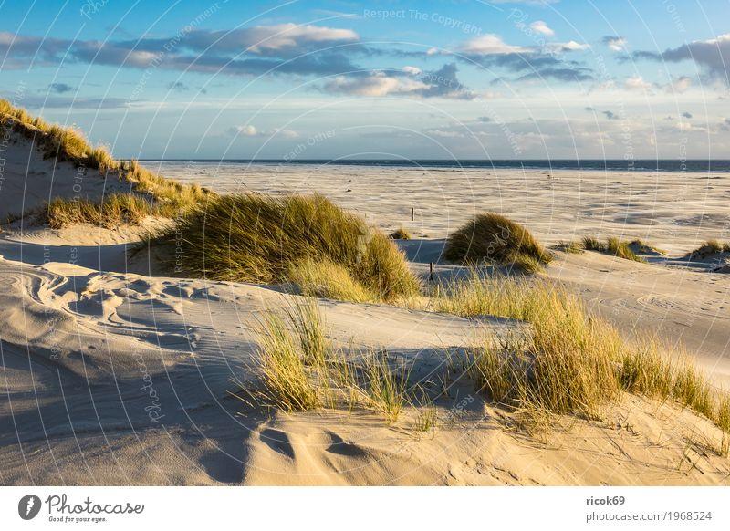 Landschaft mit Dünen auf der Insel Amrum Natur Ferien & Urlaub & Reisen blau Meer Erholung Wolken Strand gelb Herbst Küste Tourismus Sand Nordsee