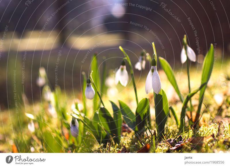 frühling im park II Natur Pflanze Frühling Schönes Wetter Blume Blüte Park Blühend Wachstum Frühlingsgefühle Farbfoto mehrfarbig Außenaufnahme Menschenleer