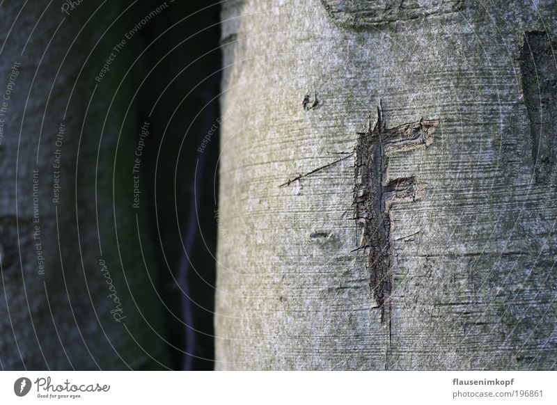 Verewigt Natur Holz alt einfach Farbfoto Außenaufnahme Menschenleer Tag
