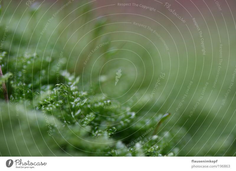 nix los, ohne moos... Natur Pflanze Moos Grünpflanze klein grün Farbfoto Nahaufnahme Tag Schwache Tiefenschärfe