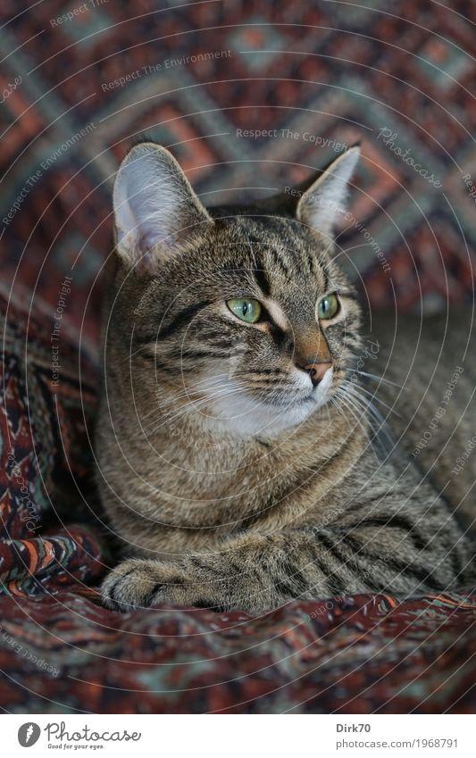 Wo ist das Vögelchen? Katze Tier Innenarchitektur Wohnung Häusliches Leben liegen Dekoration & Verzierung Energie beobachten bedrohlich niedlich Coolness weich