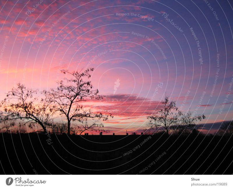 Abendhimmel Himmel Baum rot