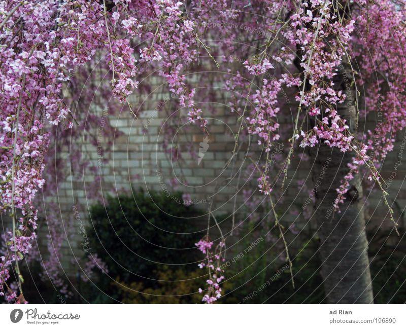 Mädchenfoto Natur Baum Pflanze Ferien & Urlaub & Reisen Blatt Tier Wand Holz Blüte Garten Glück Stein Mauer Frühling Park Glas