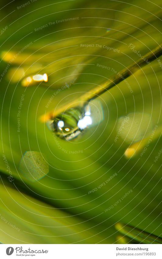 Feuchter Frühlingstag Natur grün Pflanze nass Wassertropfen rund Tropfen Kugel feucht Halm Tau harmonisch silber Grünpflanze grün-gelb