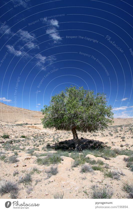Armer, einzelner Baum ohne Freunde Natur Himmel Baum grün blau Pflanze Ferne Sand Landschaft braun Umwelt Erde Wachstum Zukunft Wandel & Veränderung Wüste