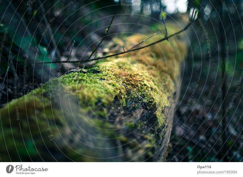 im Wald Umwelt Natur Frühling Herbst Pflanze Baum Moos Grünpflanze Nutzpflanze Park Urwald atmen beobachten Erholung fest Unendlichkeit rund braun gelb grau