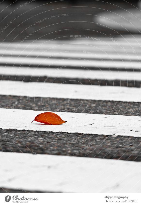 Pflanze ruhig Blatt Straße Herbst Gefühle Stein Traurigkeit Wege & Pfade orange Wetter Beton Gelassenheit Lebewesen Tiefenschärfe Fußgänger