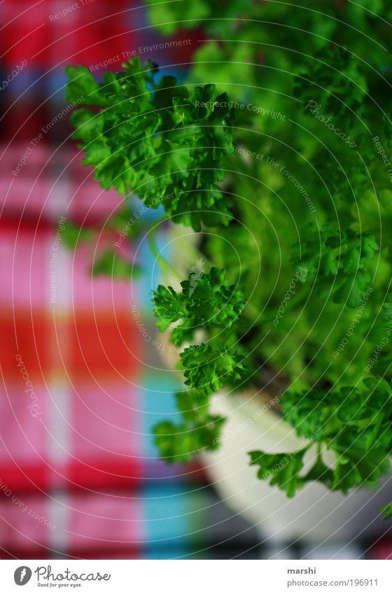 Petersilie grün Pflanze Ernährung Lebensmittel Kochen & Garen & Backen Kräuter & Gewürze lecker Bioprodukte kariert Unschärfe Petersilie Topfpflanze Kräutergarten