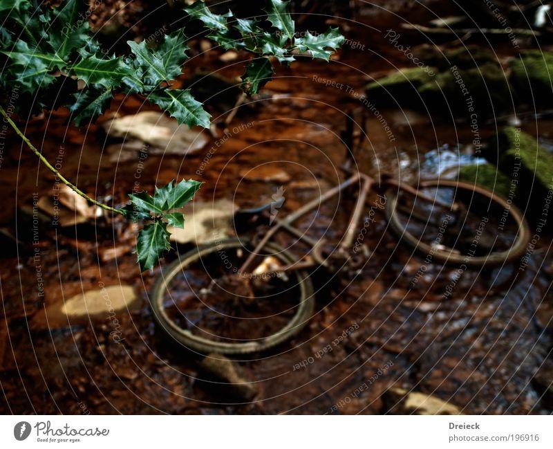 Tour de Natur alt Pflanze Wasser Landschaft Blatt Umwelt Wege & Pfade natürlich Park Erde Fahrrad Sträucher Wassertropfen kaputt fallen