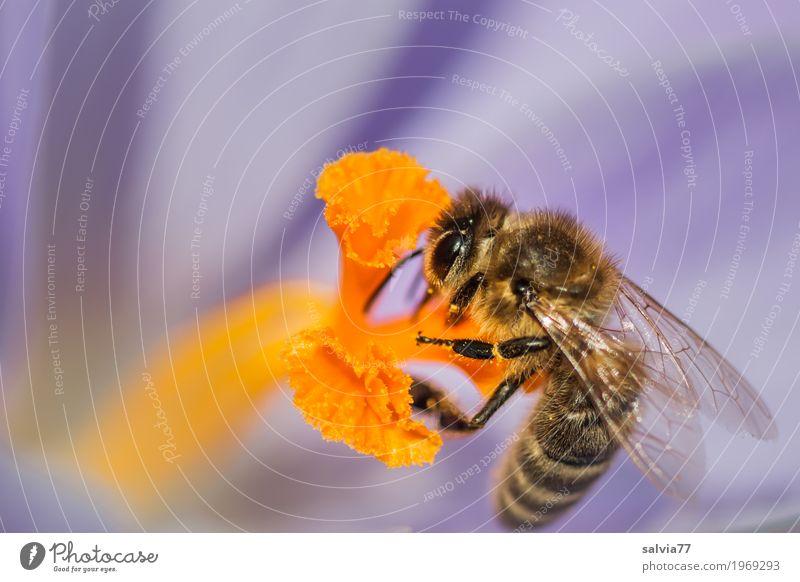 Umarmung Natur Pflanze blau Blume Tier Leben gelb Umwelt Blüte Frühling frisch süß Flügel lecker Insekt Duft