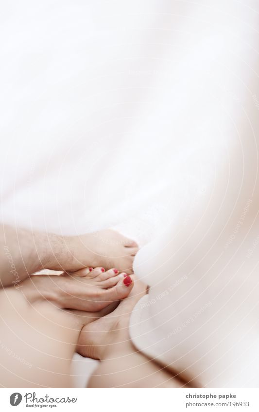 Kuschelig Liebe feminin Glück Beine Paar Fuß Zusammensein Haut schlafen Bett Vertrauen Leidenschaft Partner Verliebtheit Liebespaar Partnerschaft