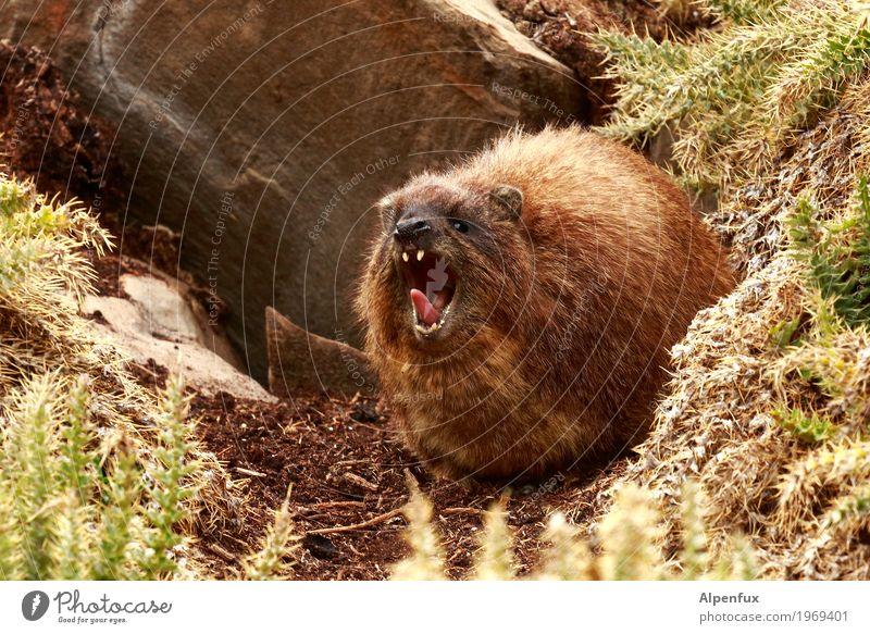 Heeeeey !!! Tier Umwelt Angst Wildtier bedrohlich Risiko Wut Fell Konflikt & Streit Gewalt Verzweiflung Tiergesicht selbstbewußt Aggression Pfote Frustration