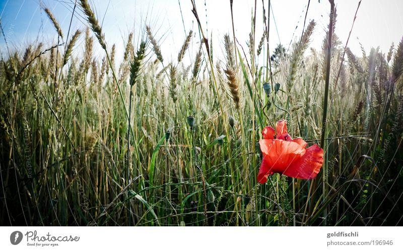 Spring has come Natur Pflanze rot Frühling Landschaft Stimmung Umwelt ästhetisch wild Schönes Wetter Tulpe Klima