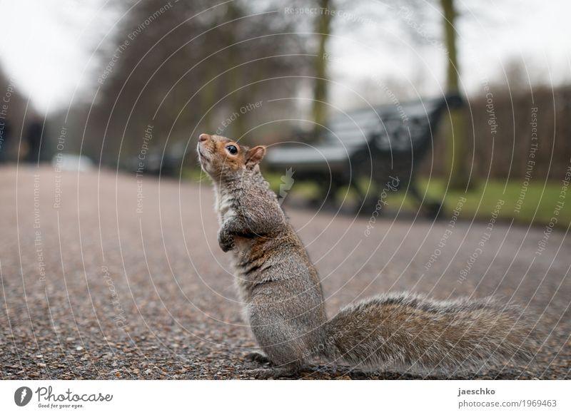 Ich bitte darum Tier klein grau braun Park Wildtier niedlich Hoffnung Neugier Wunsch Vertrauen Fell Mut Konzentration Appetit & Hunger Geruch