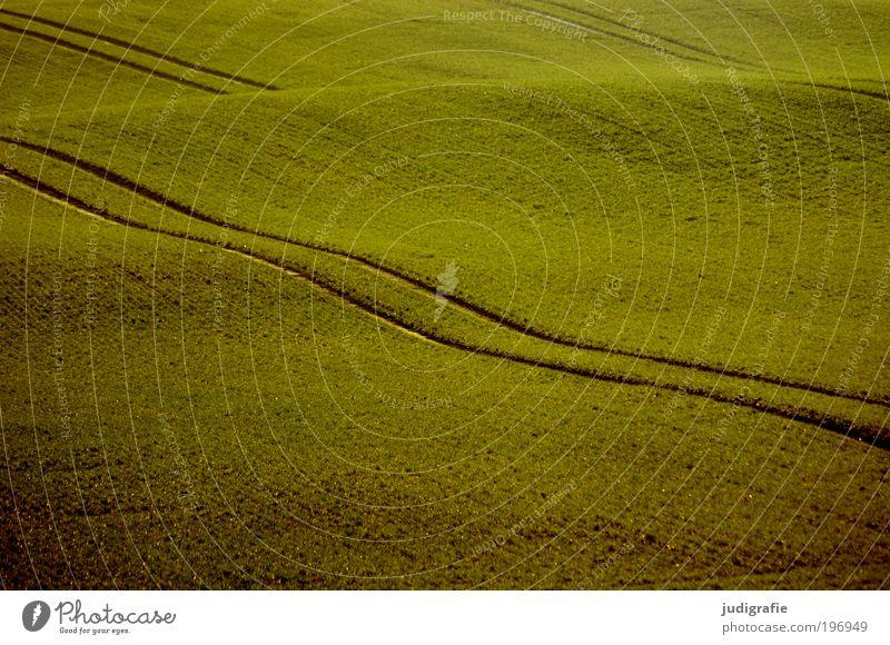 Acker Natur grün Leben Bewegung Landschaft Feld Umwelt ästhetisch weich Idylle Hügel Teppich Spuren Licht Landleben