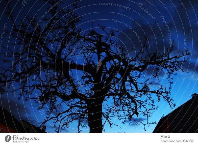 blaue Stunde Umwelt Natur Winter Baum Park dunkel gruselig Ast Farbfoto mehrfarbig Außenaufnahme Menschenleer Textfreiraum links Textfreiraum rechts