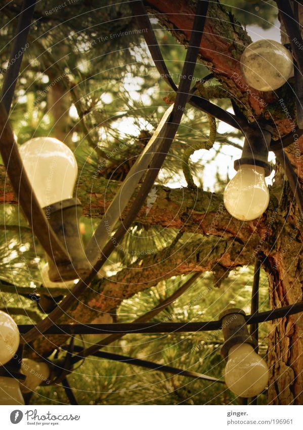 Birnbaum Garten Lampe Technik & Technologie Energiewirtschaft braun grau Glühbirne Baum verkabelt Kabel Ast grün Nadelbaum leuchten viele heimelig Lichterkette