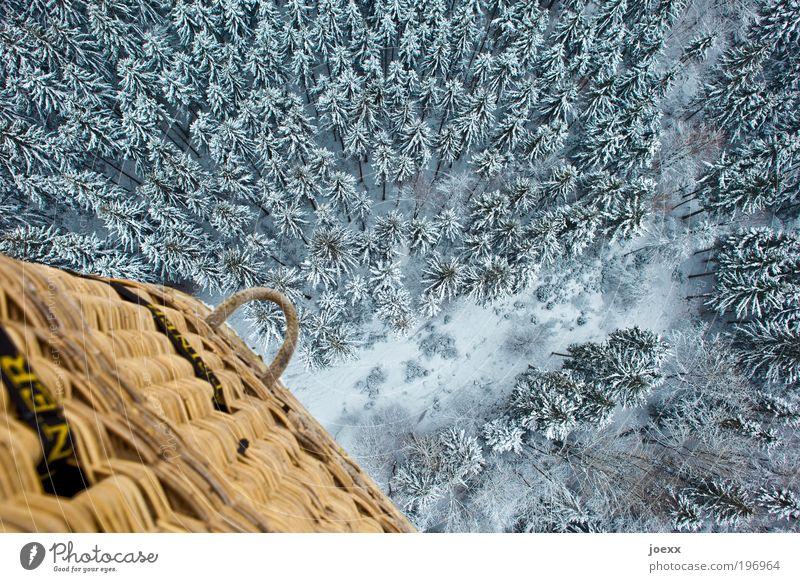500 Bäume Natur Baum Winter ruhig Wald Umwelt kalt Schnee oben frei Abenteuer Ballone Luftaufnahme unten Korb abwärts
