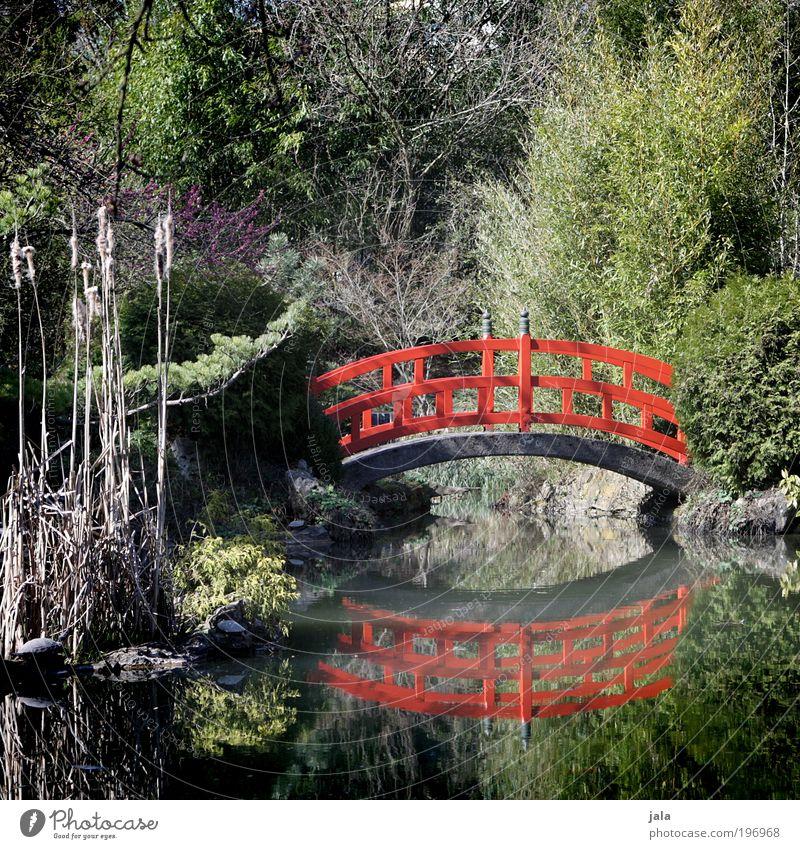 little bridge Natur Wasser Baum Pflanze rot Garten See Park Brücke ästhetisch Sträucher Asien China Schönes Wetter Teich