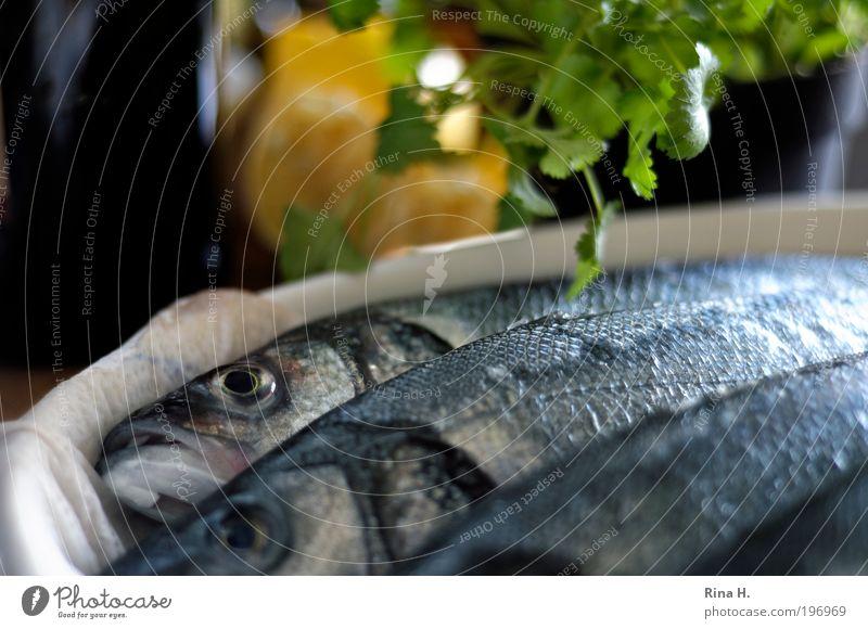 Freitag :-) Kräuter & Gewürze Zitrone Koriander Ernährung Mittagessen Abendessen Totes Tier Fisch lecker Vorfreude Traurigkeit Tod Religion & Glaube