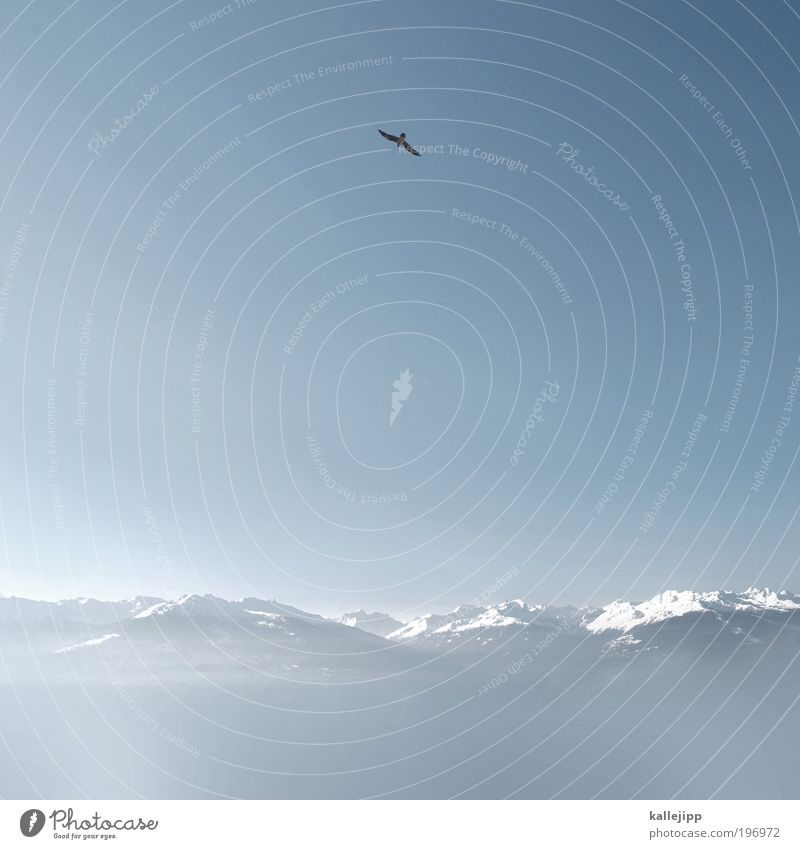 fernet branca Himmel Natur Winter Tier Schnee Landschaft Berge u. Gebirge Luft Horizont Vogel fliegen frei Sicherheit Macht Alpen Unendlichkeit