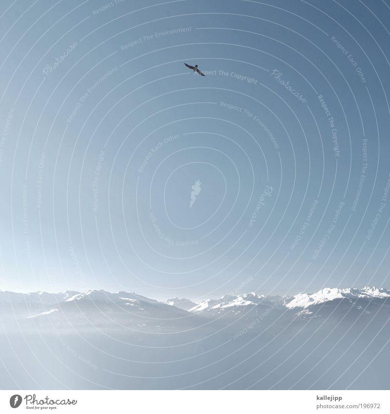fernet branca Natur Landschaft Luft Himmel Wolkenloser Himmel Horizont Winter Schnee Alpen Berge u. Gebirge Gipfel Schneebedeckte Gipfel Vogel 1 Tier fliegen