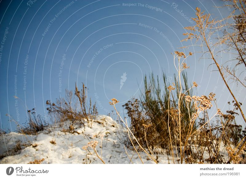 TROCKENBLUMEN Natur Himmel Baum Blume Pflanze Winter Blatt Einsamkeit kalt Schnee Erholung Wiese Blüte Gras Landschaft Luft
