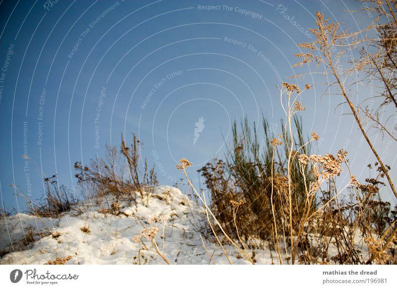 TROCKENBLUMEN Umwelt Natur Landschaft Pflanze Luft Himmel Wolkenloser Himmel Horizont Winter Wetter Schönes Wetter Eis Frost Schnee Baum Blume Gras Sträucher