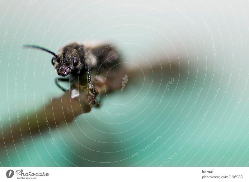 Dankbarkeit im Mikrokosmos Natur Pflanze Wasser weiß Tier schwarz Umwelt Auge braun Angst Wildtier Fliege sitzen Tierfuß Ast nass