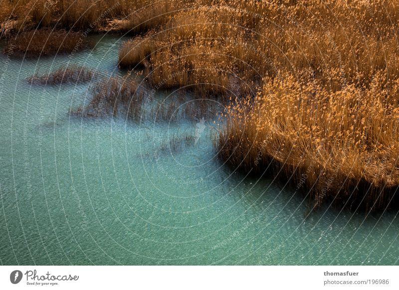 Baggersee Natur blau Wasser Sonne Sommer gelb Erholung Landschaft See Zufriedenheit Wind gold Ausflug Sträucher Schönes Wetter Freundlichkeit