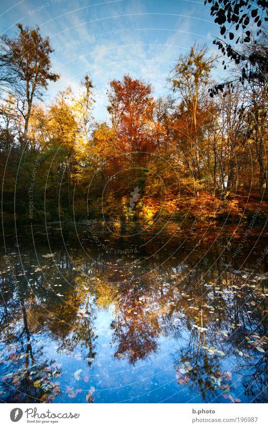 oben ist unten Himmel Natur blau Wasser Baum rot Pflanze Sonne Sommer Freude Blatt ruhig Wald Umwelt Landschaft Herbst