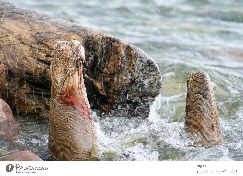 Wasserskulpturen Natur alt Sommer Wasser Umwelt Küste Holz außergewöhnlich Wellen einzigartig Wandel & Veränderung Ostsee entdecken bizarr standhaft Meer