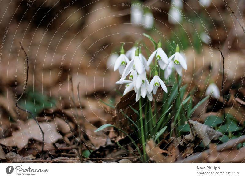 Alle zusammen in den Frühling Umwelt Natur Tier Erde Pflanze Blume Blatt Blüte Grünpflanze beobachten Blühend entdecken ästhetisch einfach neu braun grün weiß